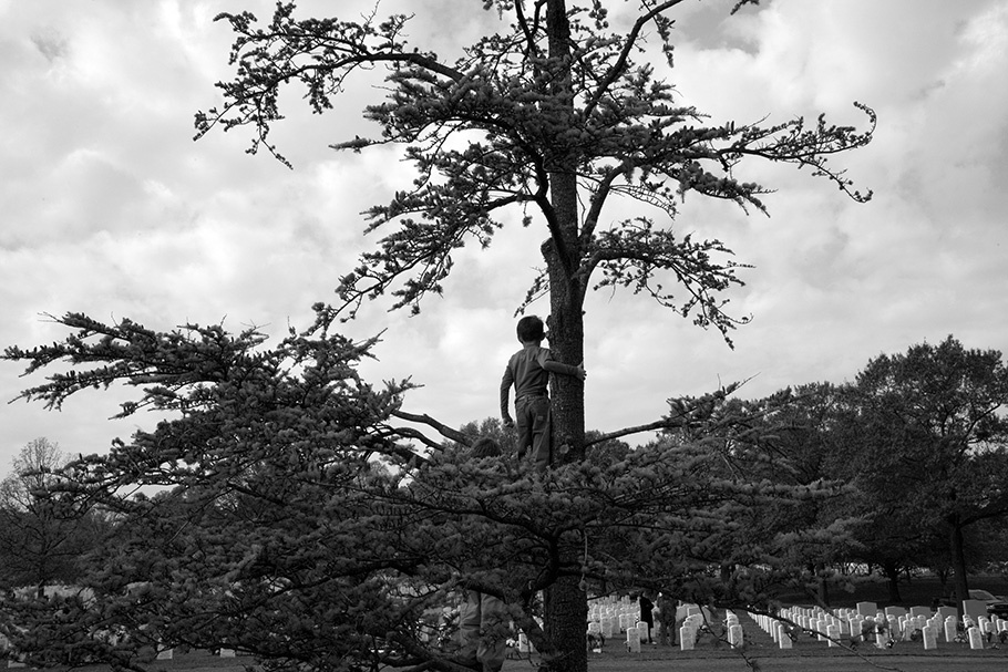 Boy in tree.
