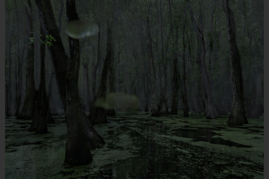 A swamp at night