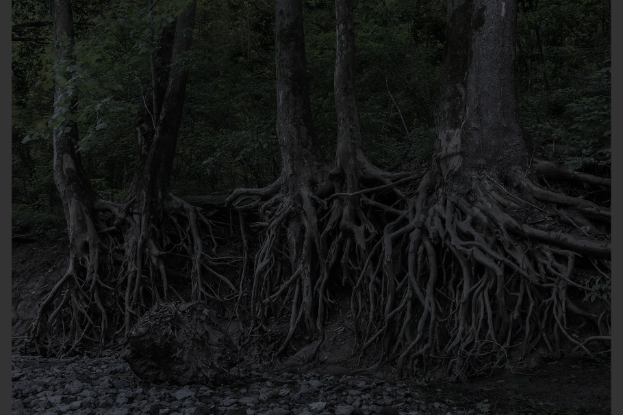 The roots of trees in a forest in Indiana, United States