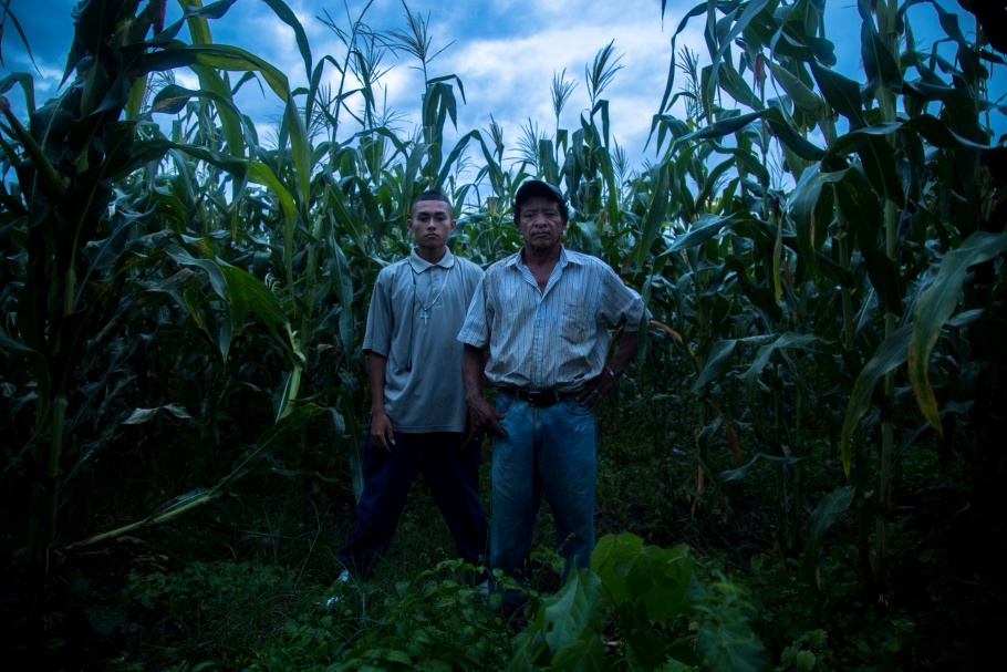 A man and a boy standing in a corn field